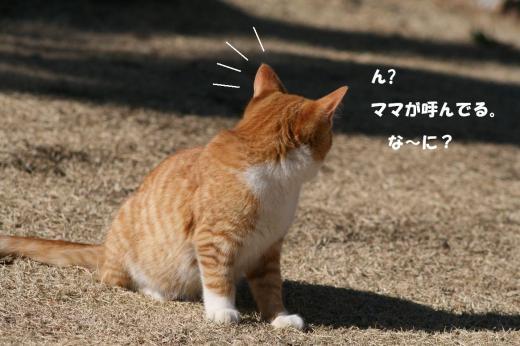 栗ちゃん002