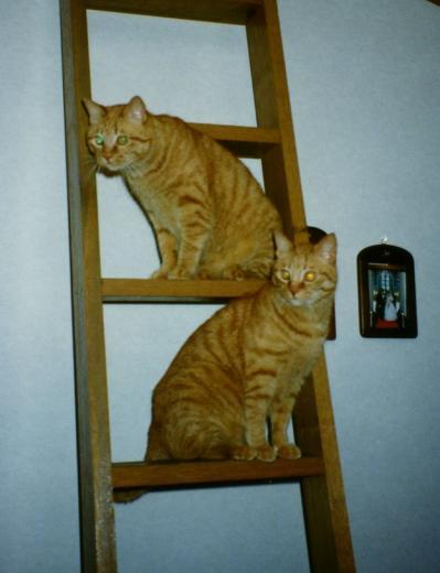 ロフトに上がる階段にて