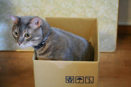 ティラが気になる箱入りウィル