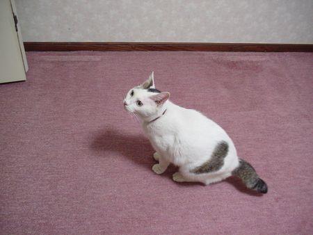 中二階に上がったチビィちゃん