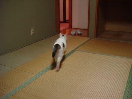 和室を歩こう!