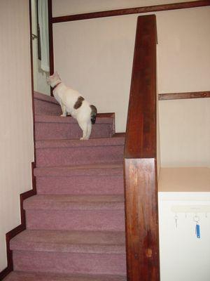 階段を上ります。