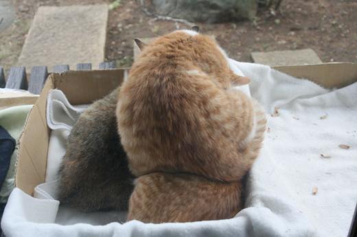 猫箱001