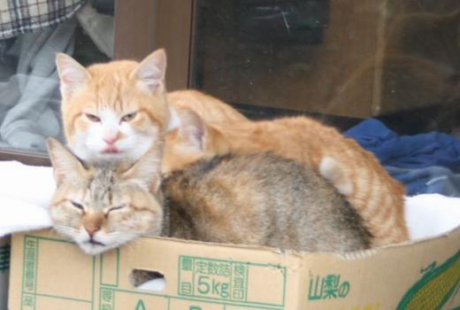 猫箱002