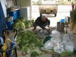 白菜の保存