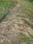 モグラの巣