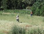草刈りの応援