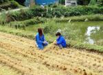 稲の穂の観察
