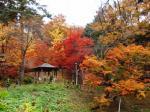 船岡公園の紅葉