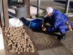 里芋の乾燥