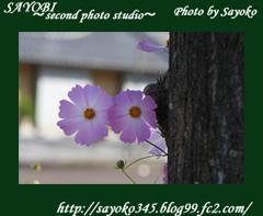 二番目の小夜子の写真館♪0142
