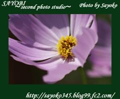 二番目の小夜子の写真館♪0143