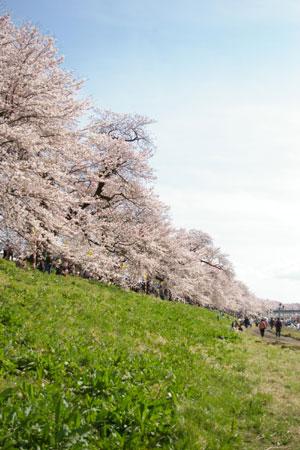 一目千本桜 大河原-022