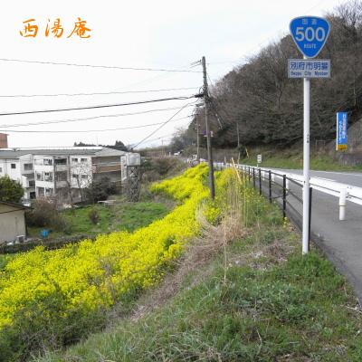 08_04 花01