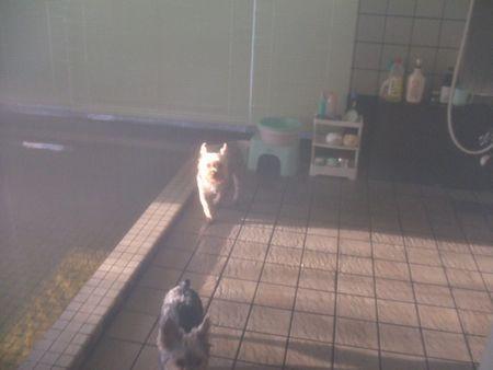 060106-ofuro.jpg