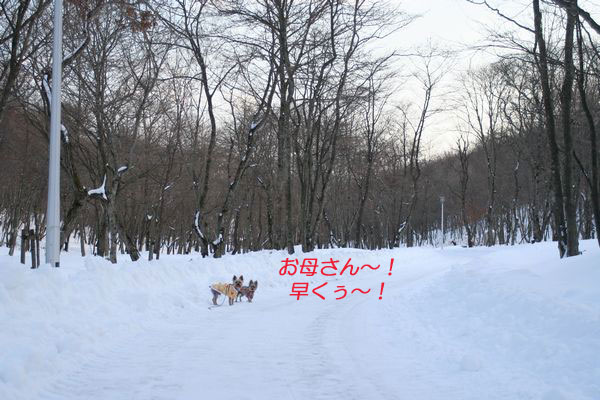 060115-haginosato6-k.jpg