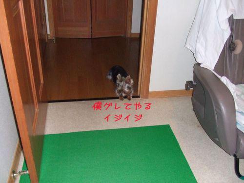 060120-kago4.jpg
