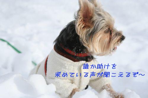 060125-yuki5.jpg