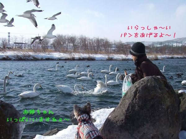 060126-hakutyou1.jpg