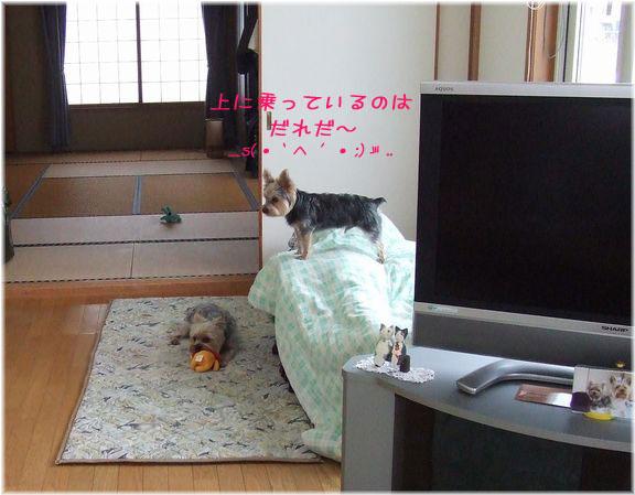 060130-anma.jpg