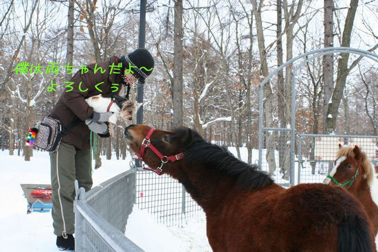 060208-northern-horse5.jpg