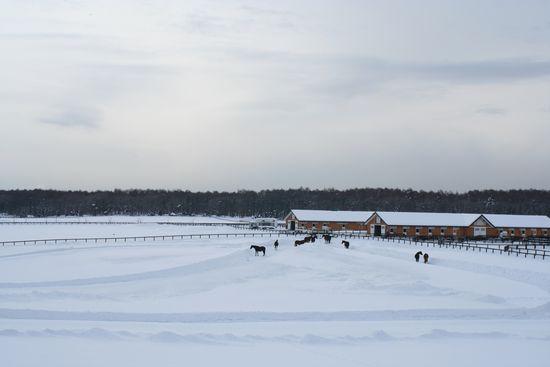 060208-northern-horse6.jpg