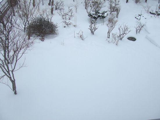060210-niwa1.jpg