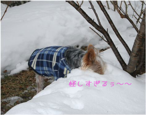 060213-kunkun3.jpg