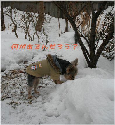060214-kunkun1.jpg