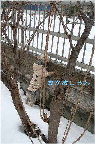 060214-kunkun3.jpg