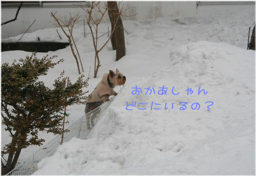 060214-kunkun4.jpg