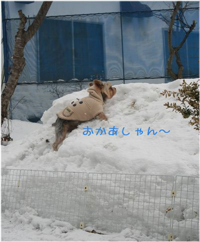 060214-kunkun8.jpg