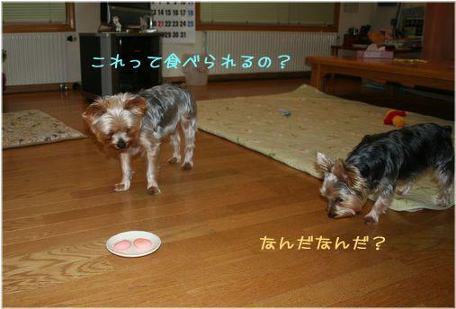 060214-tyoko2.jpg