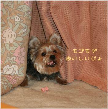 060214-tyoko6.jpg