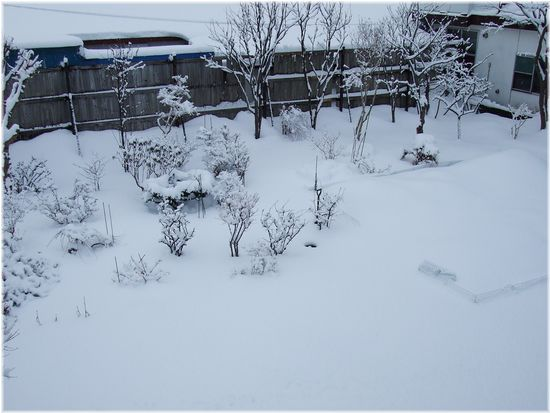 060302-yuki1-k.jpg