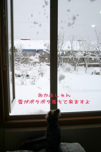 060302-yuki6.jpg