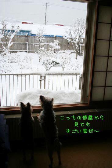 060302-yuki8.jpg