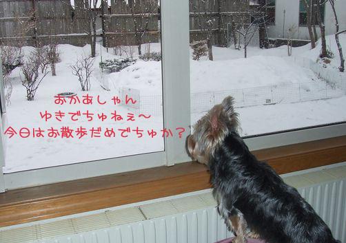 060313-yuki1.jpg