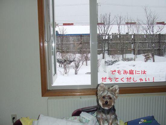 060313-yuki2.jpg