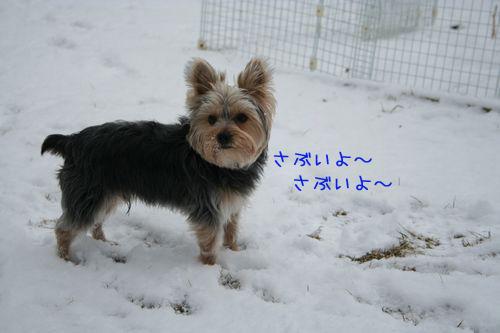 060313-yuki5.jpg