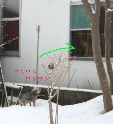 060313-yuki6.jpg