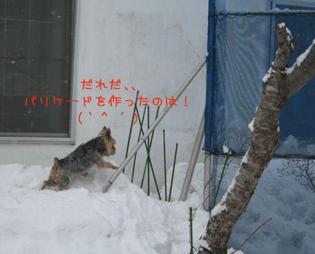 060313-yuki8.jpg