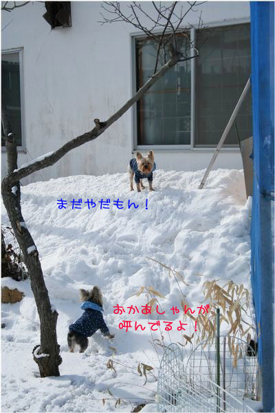 060314-yuki6.jpg