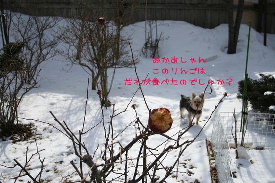 060315-niwa1.jpg