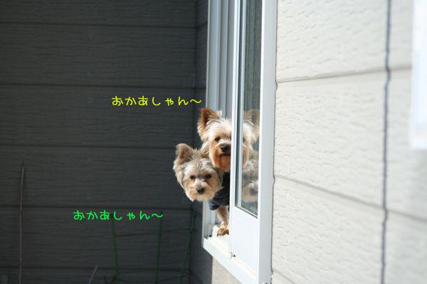 060315-niwa3.jpg