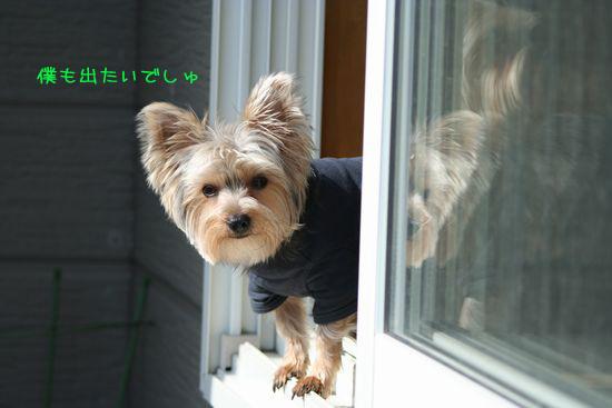 060315-niwa4.jpg