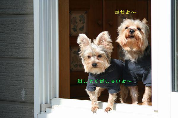 060315-niwa5.jpg