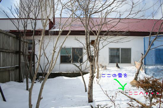 060318-niwa1.jpg