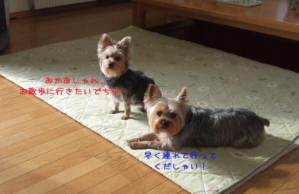 060321-yuki1.jpg