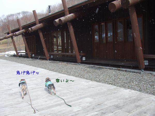 060321-yuki4.jpg